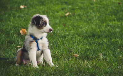 PetLux.dk tilbyder kvalitetsprodukter til din hund og kat